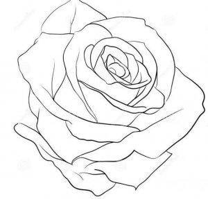 Ongekend Bloemen tekenen en schilderen, rozen - Zelfkunstmaken.nl OQ-79